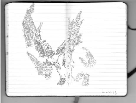 Hawthornden 14