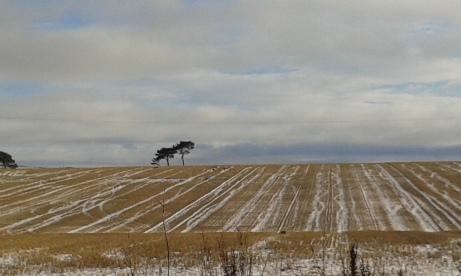 Snowy Field 2 2018-01-18 12.45.19